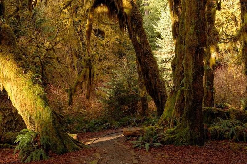A trail through the rain forest.