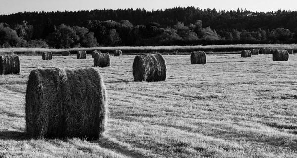 Bales of grass.