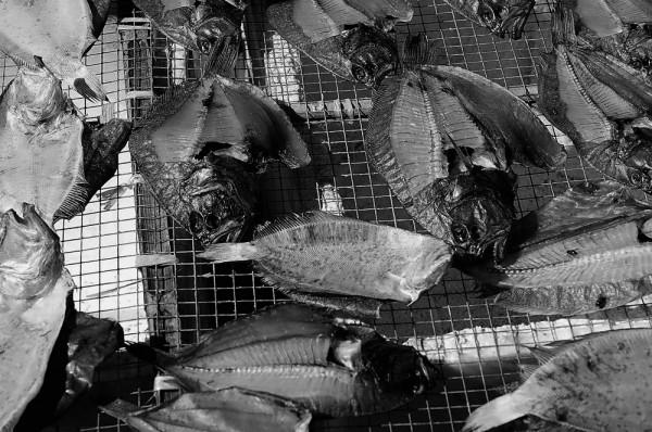 Drying fish at Chung Chau