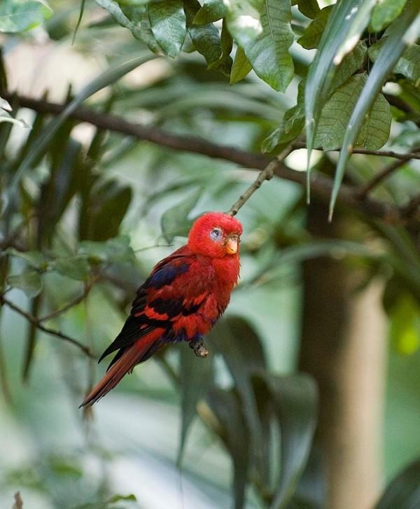A red bird at Hong Kong Park.