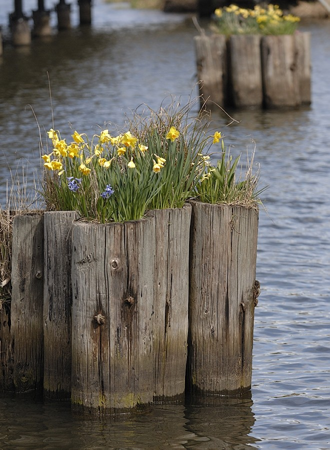 Spring flowers in funny places.