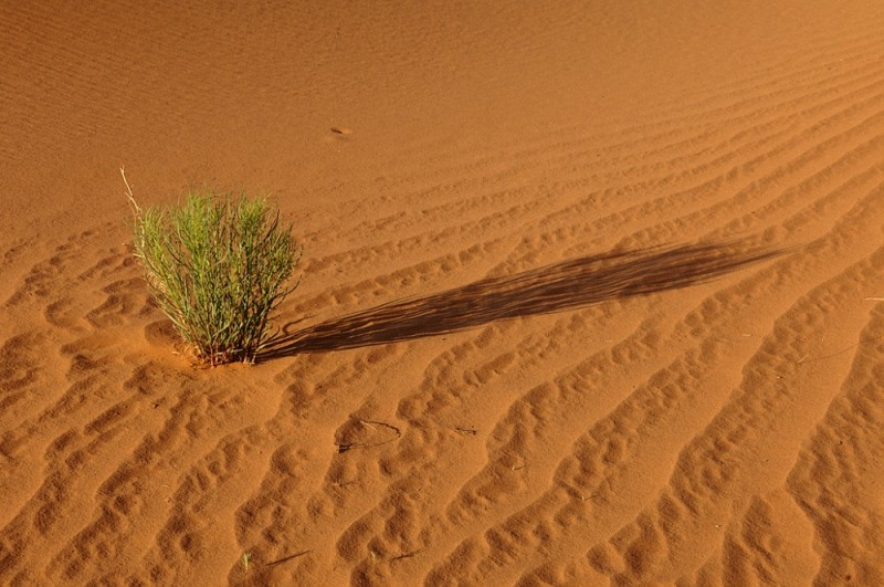 A brave desert plant growing in the sand.