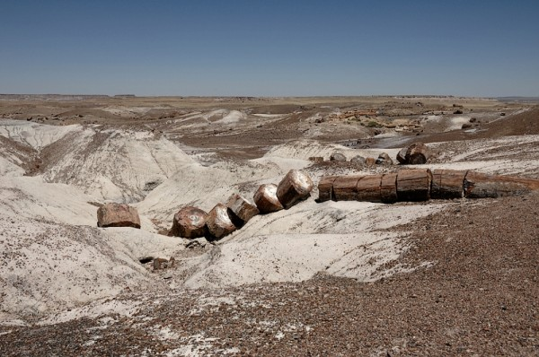 A petrified tree in Petrified Forest NP.