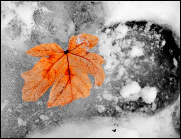 A leaf in an icy footprint.