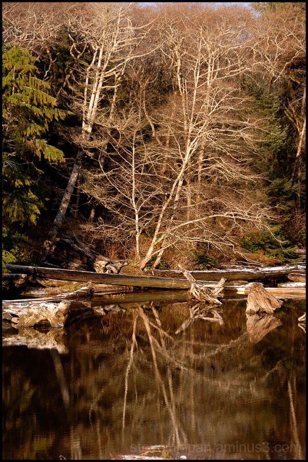 Trees reflected in Kalaloch Creek.