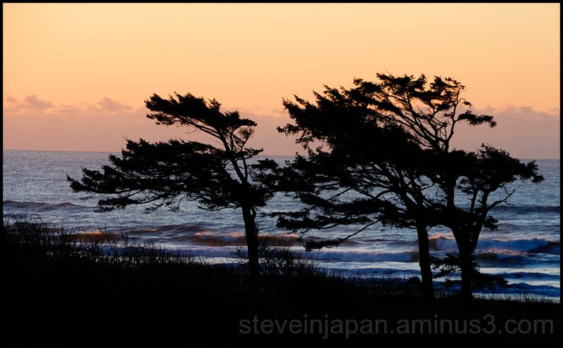 Trees at Kalaloch Beach.
