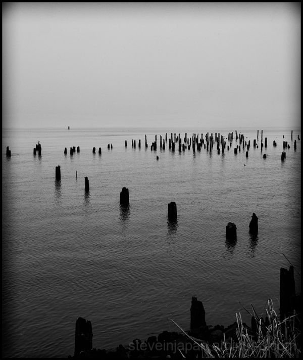 Pilings in the Columbia River at Astoria, OR.