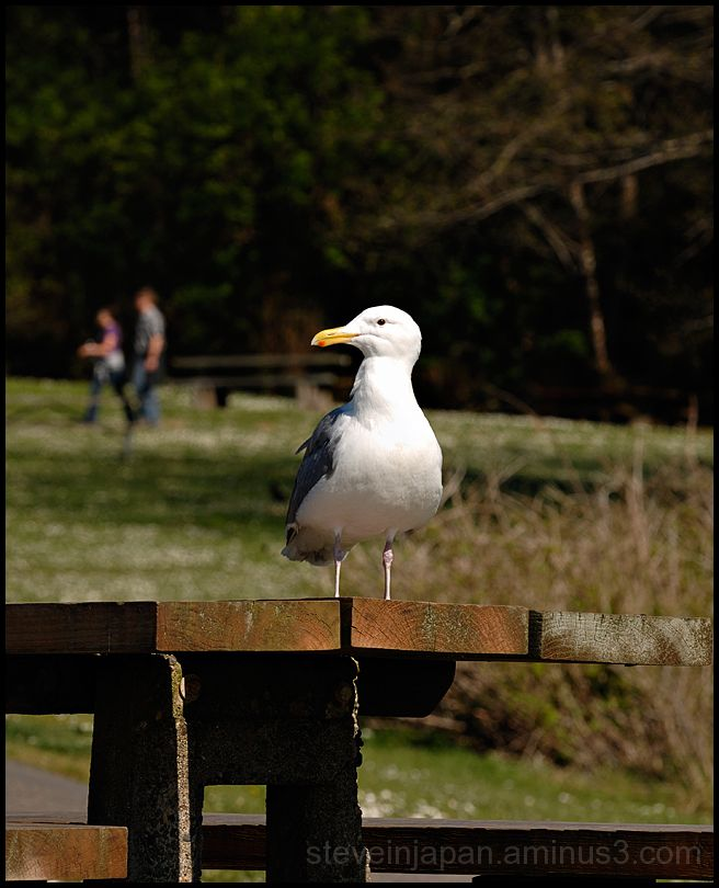 A seagull looking for a handout.
