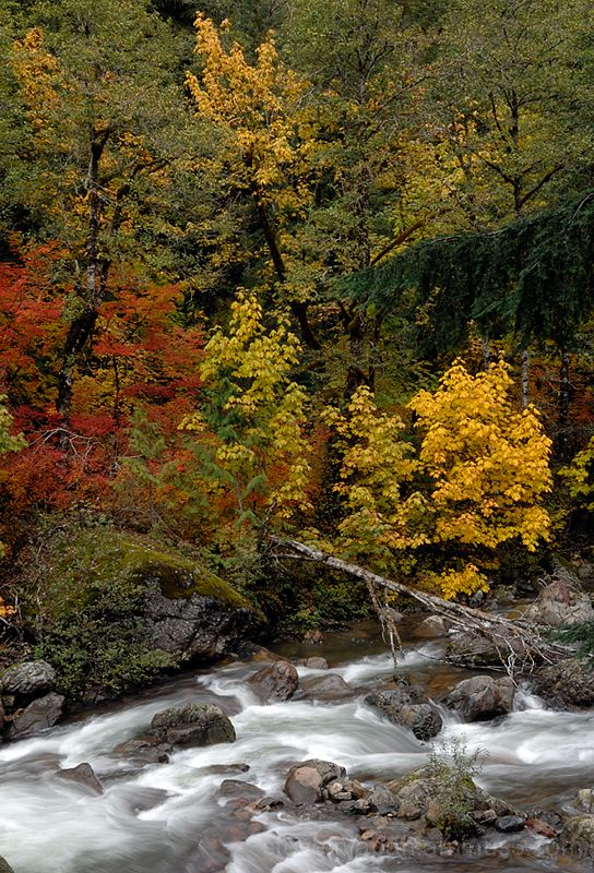 Fall color along the Mountain Loop Highway.