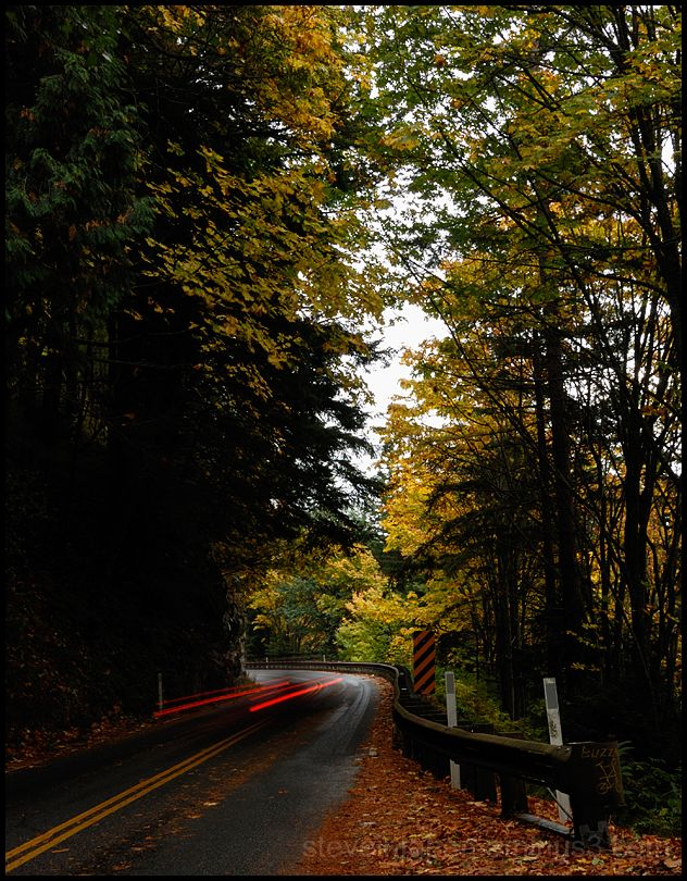 Fall color along Chuckanut Drive.