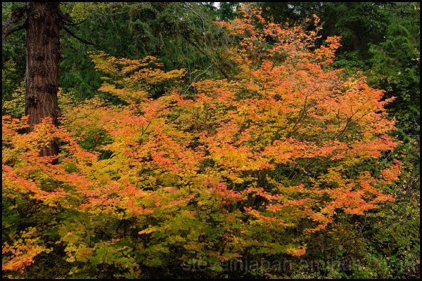 Fall color along Chuckanut Drive.