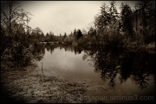 Preachers Slough near Montesano, WA, USA.