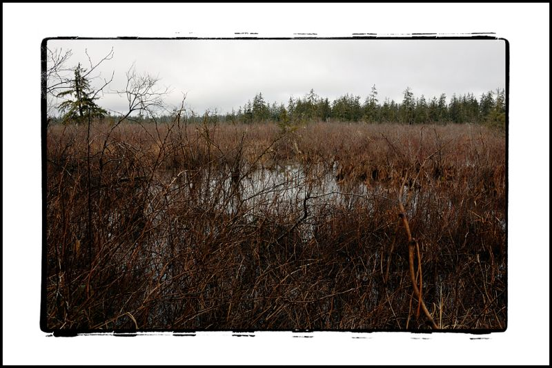 A swamp that has formed in Blue Slough.