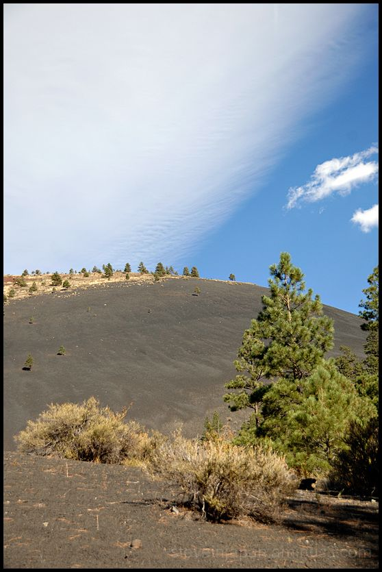 Trees growing in the cinder of Sunset Crater.