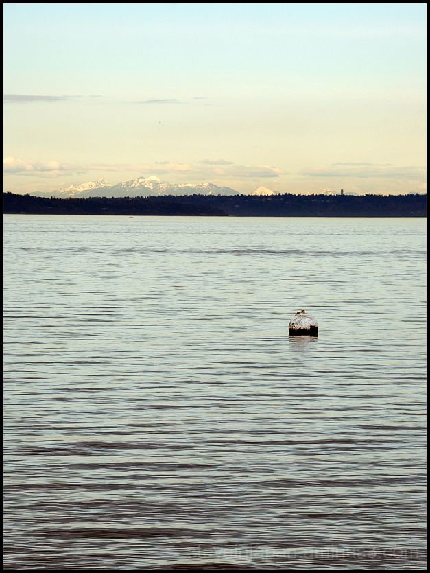 A view across Commencent Bay in Tacoma, WA.