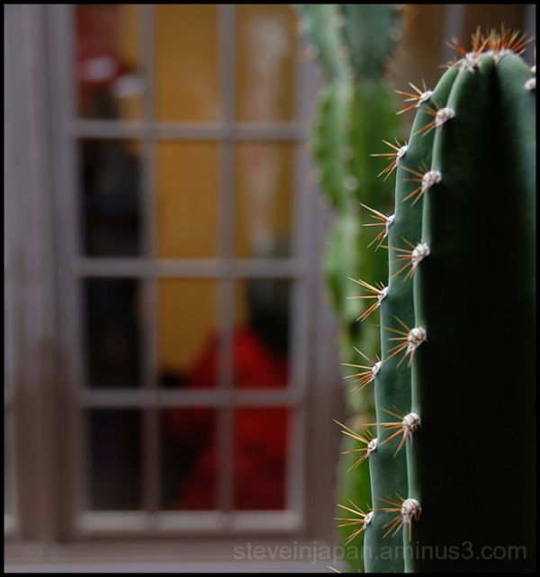 A cactus at the Heard Museum.