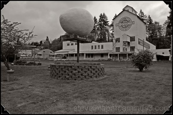 The World's Largest Egg in Winlock, WA.