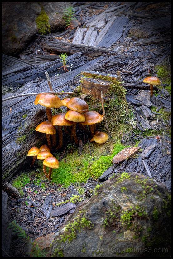 Mushrooms in the concentrator in Monte Cristo.
