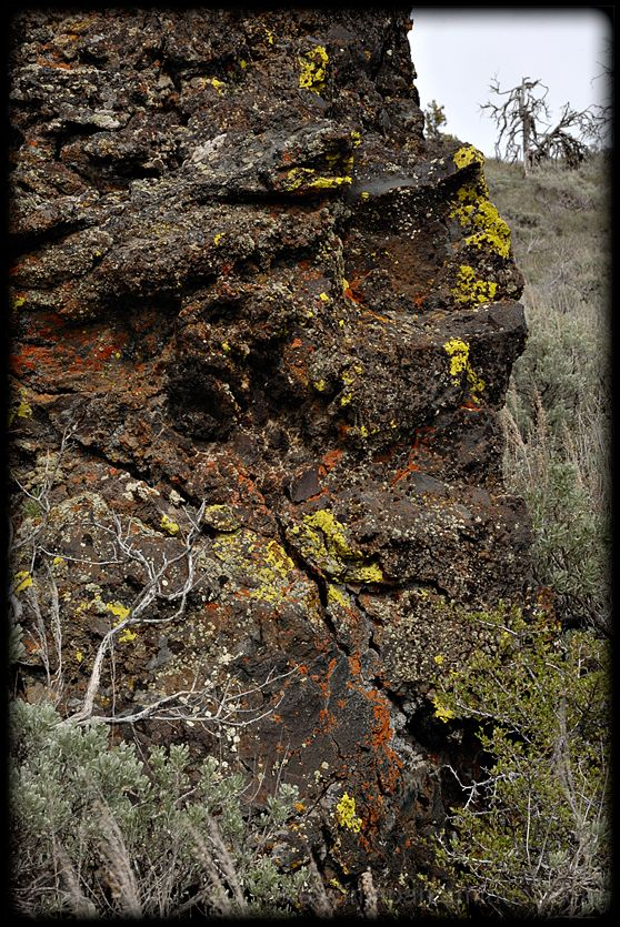 Lichen dissolving rock  at Craters of the Moon NM.