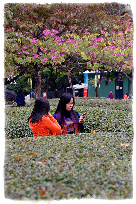 Two ladies in the maze in Kowloon Park.