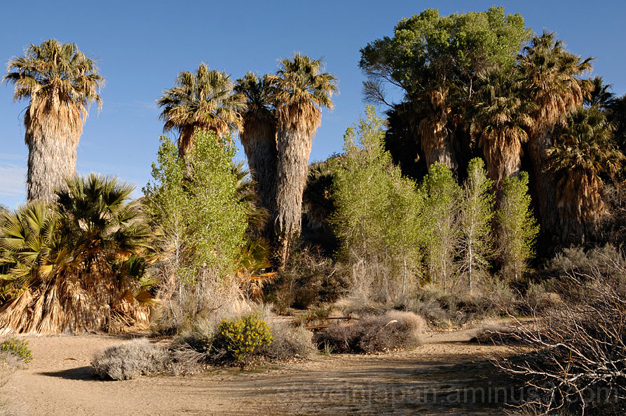 Cottonwood Springs in Joshua Tree NP.