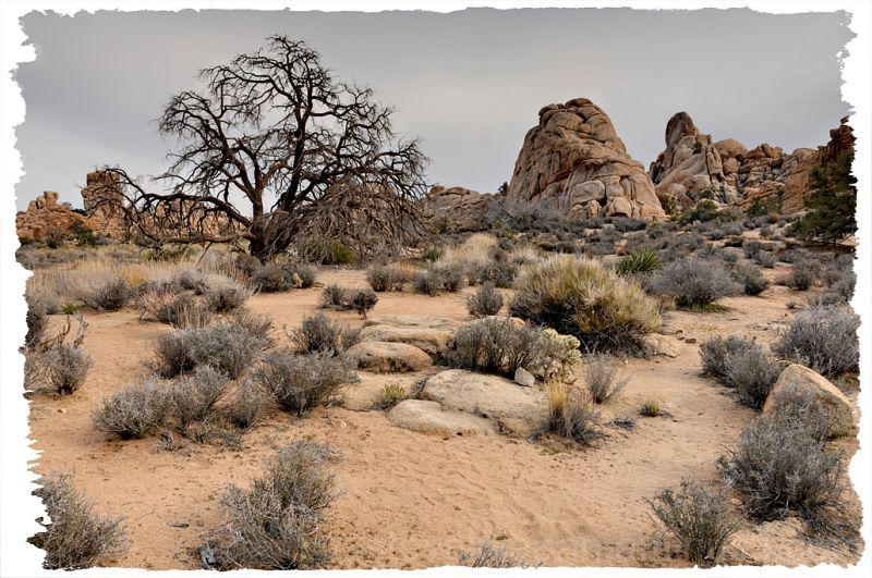 An arid scene in Hidden Valley.