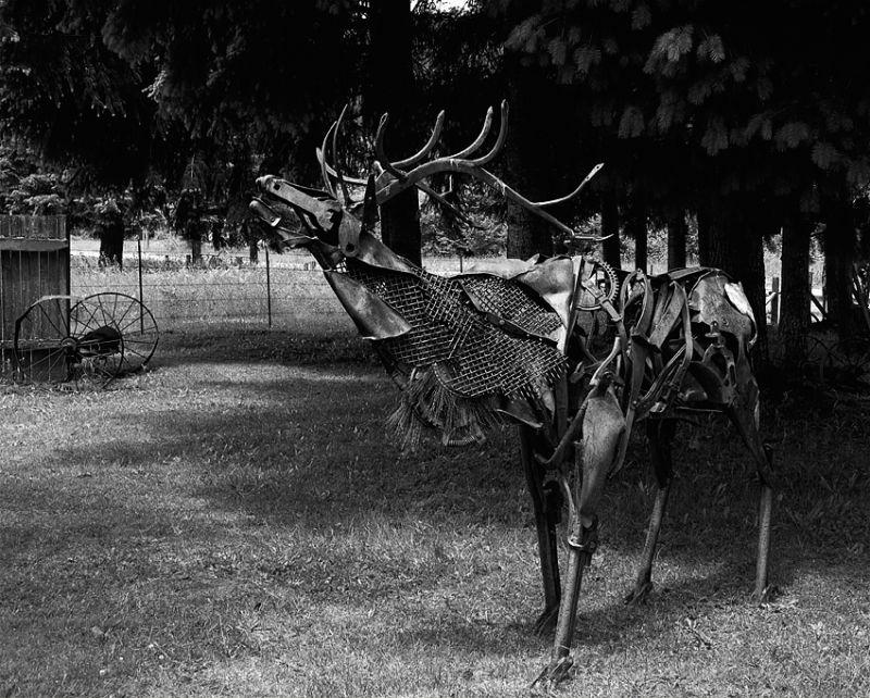 A bull elk made of scrap iron.
