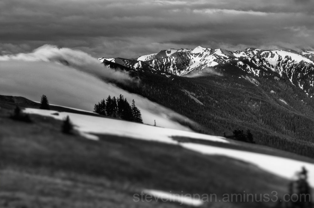 Clouds build at Hurricane Ridge in Olympic NP.