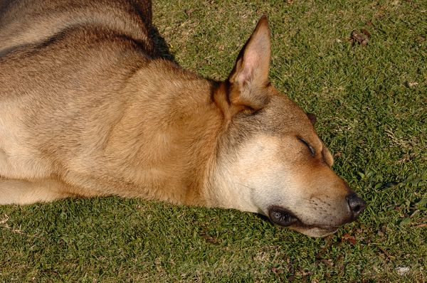A dog sleeping in Ngong Ping Village.