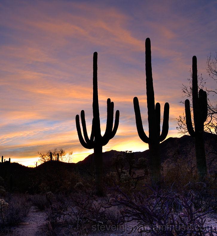 Sunrise at Saguaro National Park.