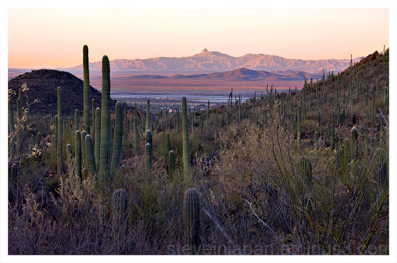 Sunrise at Saguaro National Park.