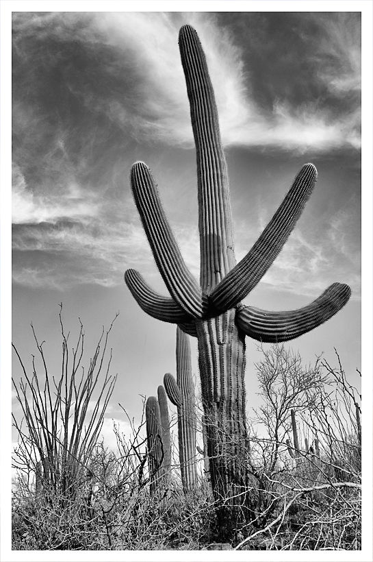 Early morning at Saguaro National Park.