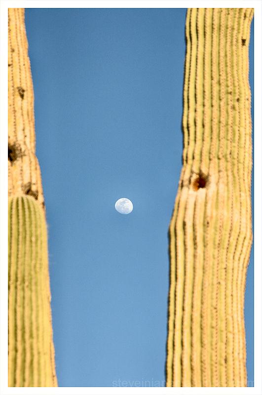 Early morning at Saguaro National Park.