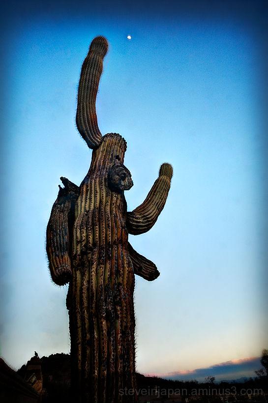 A spooky Saguaro cactus for Halloween.
