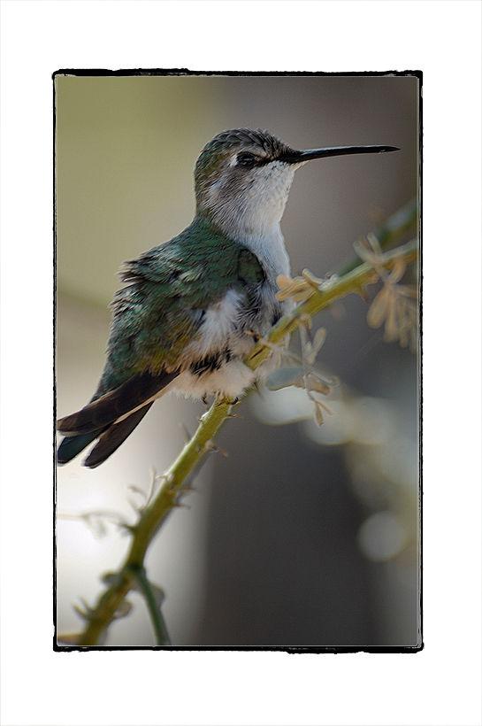 Mama hummingbird is finished preening.