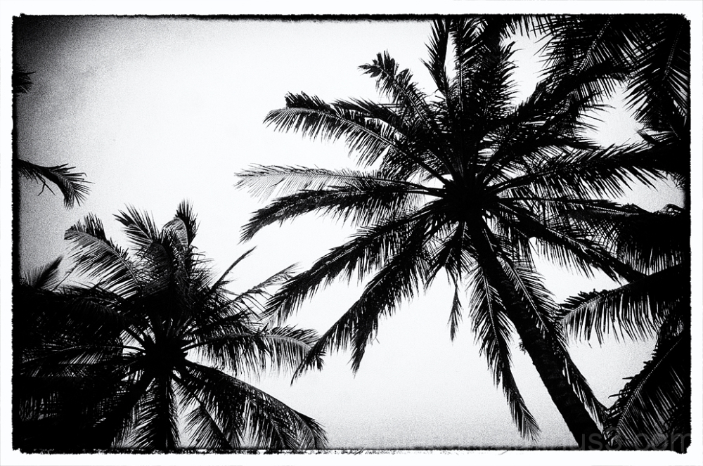 The palm trees over the pool at Waka di Ume.