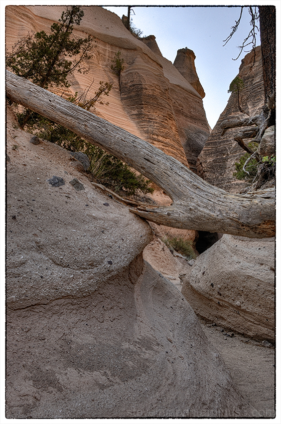 A dead tree and tent rocks at Tent Rocks NM.