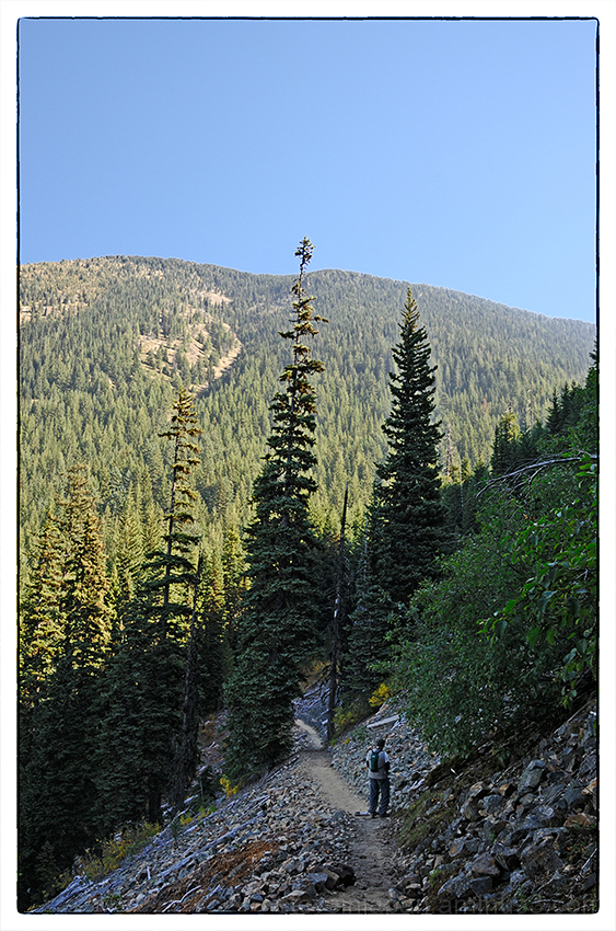 The trees thin on the Crystal Peak trail.