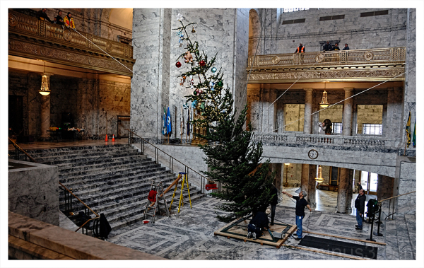 The Holiday Tree in the  WA State Capitol rotunda.