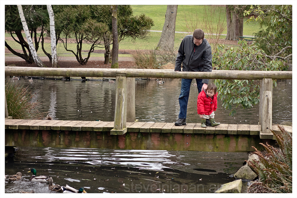 Checking out the ducks at Point Defiance Park.