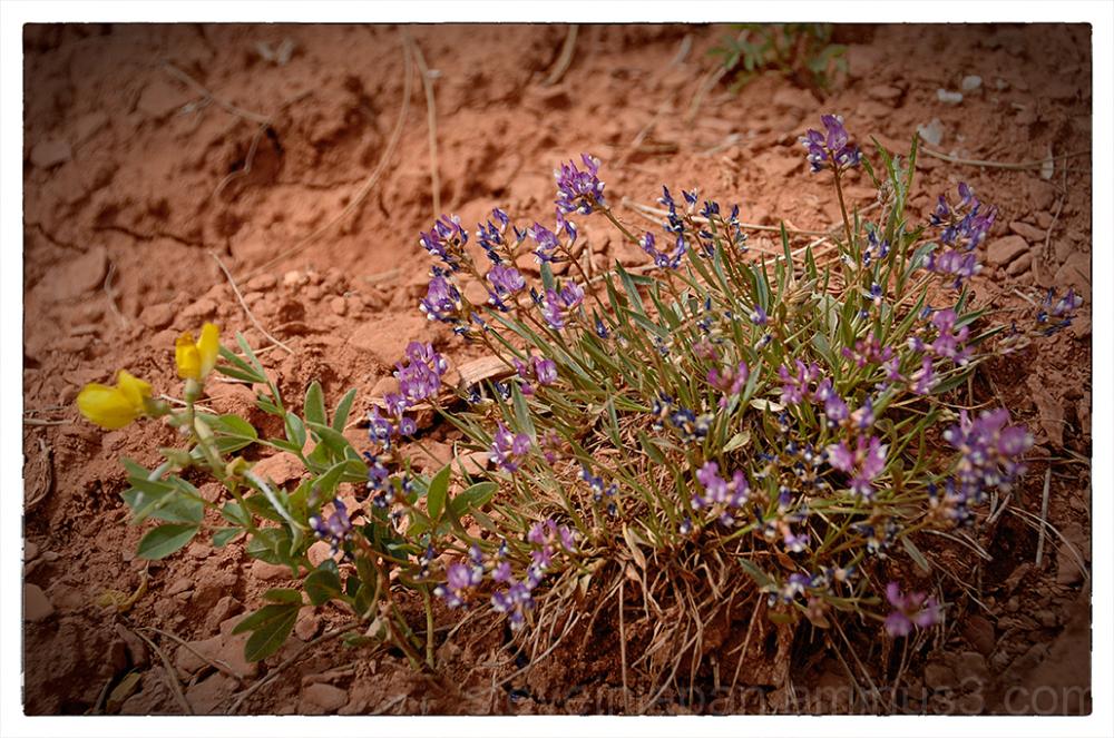 Wildflowers at Devils Tower NM.
