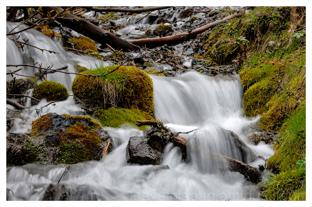 A tiny stream near Hurricane Ridge.