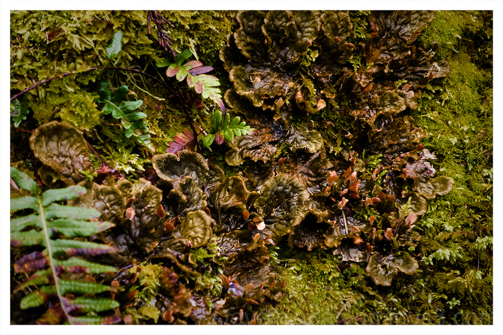 Moss, ferns, and fungus on a fallen tree.