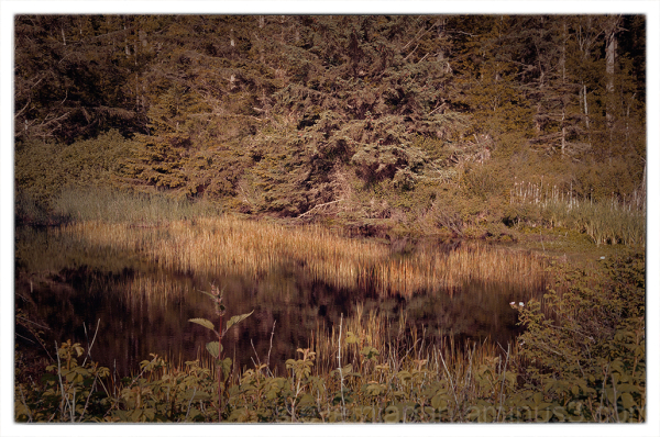 A small pond at Deception Pass State Park.