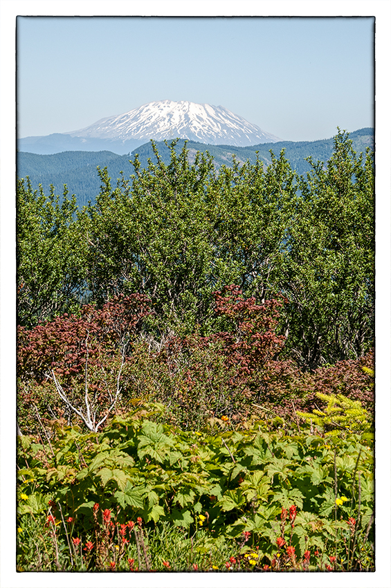 Mount Saint Helens from Silver Star Mountain.