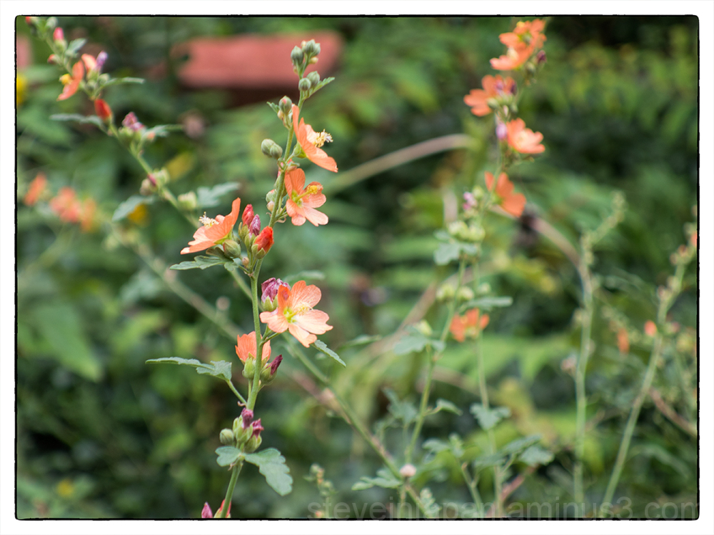 Flowers in Jerome, Arizona.