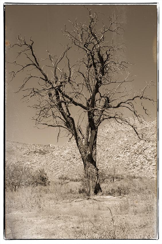 A tree in Valentine, AZ.