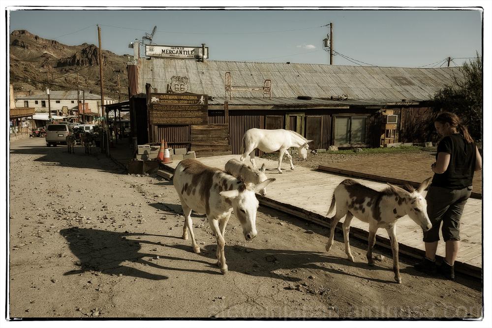 Oatman, AZ on old Route 66.