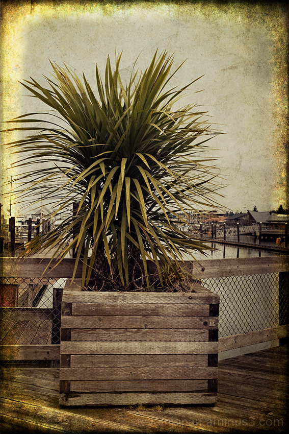 A plant on the dock at Budd Inlet in Olympia, WA.