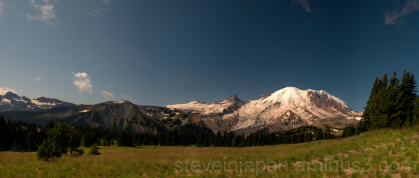 A meadow at Sunrise on Mt. Rainier NP.